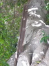 25b Old Railway line Tree Support 3 Hamrun